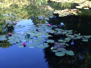 Monet's Water Lily Garden at Giverny