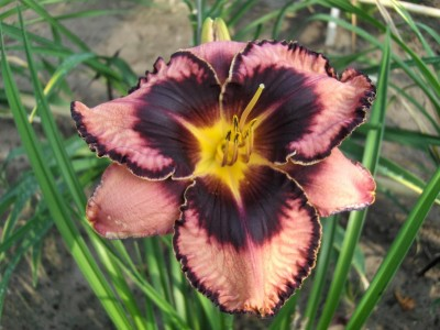 Simmons Overture Lily